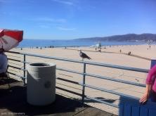 One lone seagull