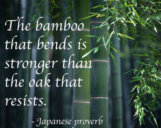 bamboo-bends-oak-resists