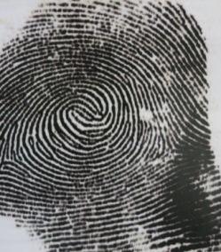 fingerprintwhorlsimg_0526